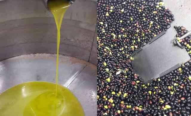 procedimenti meccanici - olio extravergine di oliva